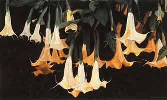 Daturas horizontales, 2002, oil on canvas 38.2 x 63.8 in