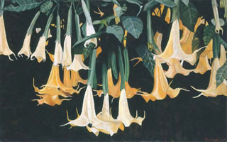 Daturas Horizontales, 2003, oil on canvas 31.9 x 51.2 in
