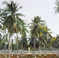 Palmar del Pacífico, 2004, oil on canvas, 58.3 x 58.3 in